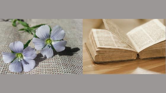 Len w Biblii