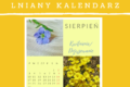 Dojrzewanie lnu – sierpniowa kartka z kalendarza